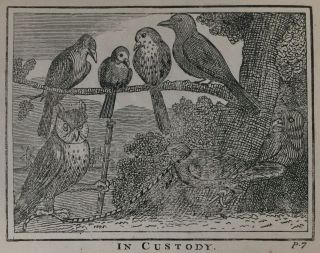 """[Juvenile- Early American """"Cock Robin""""] The Tragi-Comic History of the Burial of Cock Robin"""