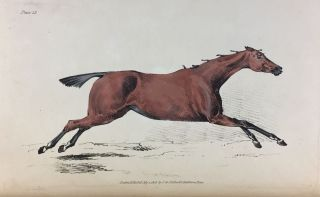[Alken, Henry] The Beauties and Defects in the Figure of the Horse...